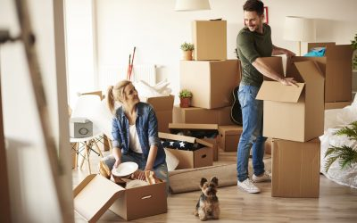 5 Things to Consider When Moving With Pets